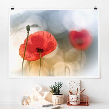 Poster - Mohnblumen am Morgen - Querformat 3:4