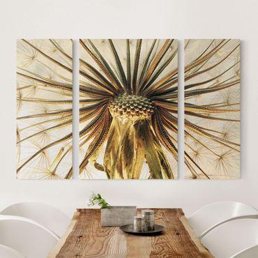 Leinwandbild 3-teilig - Dandelion Close Up - Triptychon