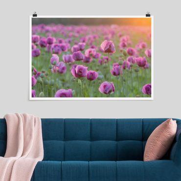 Poster - Violette Schlafmohn Blumenwiese im Frühling - Querformat 2:3