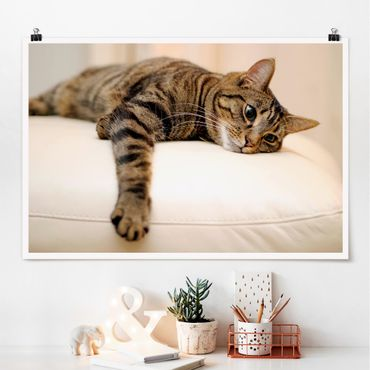 Poster - Cat Chill Out - Querformat 2:3