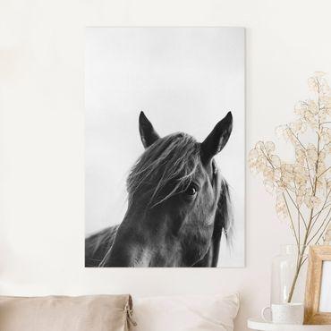 Leinwandbild - Neugieriges Pferd - Hochformat 3:2
