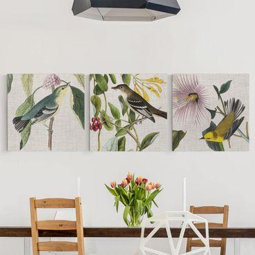 Leinwandbild 3-teilig - Vögel auf Leinen Set I - Quadrate 1:1