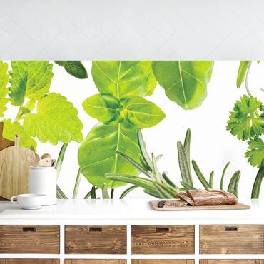 Küchenrückwand - Verschiedene Kräuter