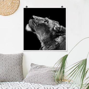 Poster - Portrait einer Löwin - Quadrat 1:1