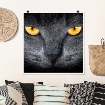 Poster - Cats Gaze - Quadrat 1:1