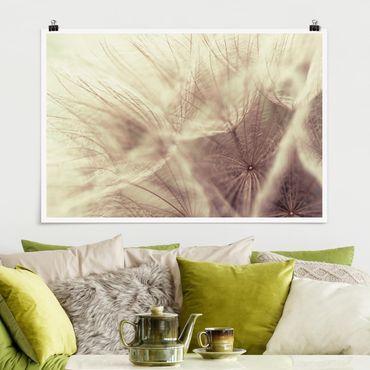 Poster - Detailreiche Pusteblumen Makroaufnahme mit Vintage Blur Effekt - Querformat 2:3