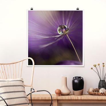 Poster - Pusteblume in Violett - Quadrat 1:1