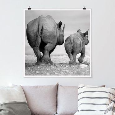 Poster - Wandering Rhinos II - Quadrat 1:1