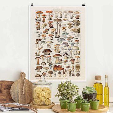 Poster - Vintage Lehrtafel Pilze - Hochformat 4:3