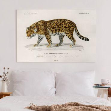 Leinwandbild - Vintage Lehrtafel Jaguar - Querformat 2:3