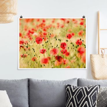 Poster - Summer Poppies - Querformat 3:4
