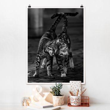 Poster - Kätzchenfreundschaft - Hochformat 3:4