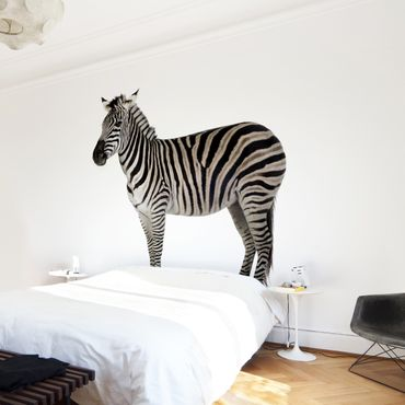 Fototapete Dickes Zebra