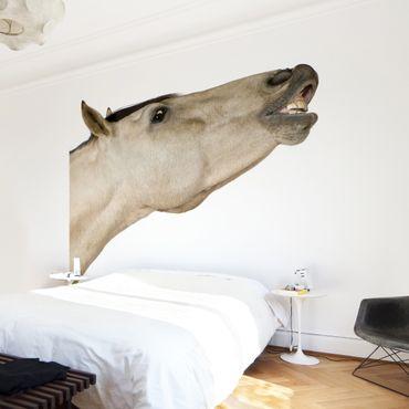 Fototapete Dun Horse