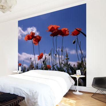 Fototapete Field of Poppies