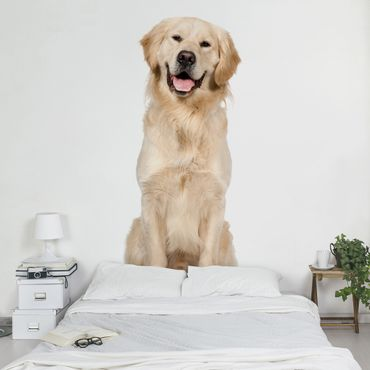 Fototapete Portait of Labradors and Golden Retriever