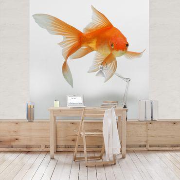 Fototapete Goldfish is Watching you