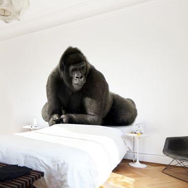 Fototapete Gorilla I