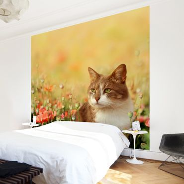 Fototapete Katze im Mohnfeld