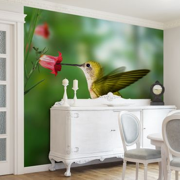Fototapete Kolibri und Blüte