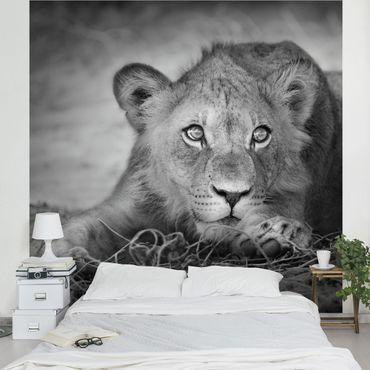 Fototapete Lurking Lionbaby