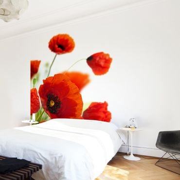 Fototapete Radiant Poppies