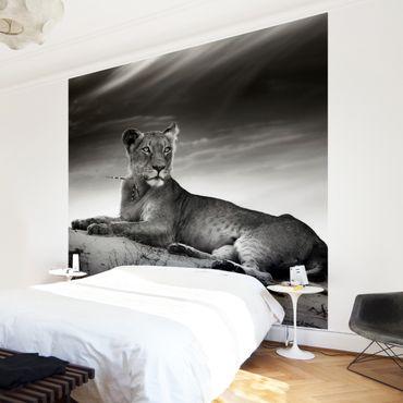 Fototapete Resting Lion