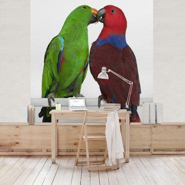Fototapete Verliebte Papageien