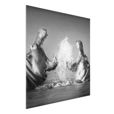 Forexbild - Hippo Fight