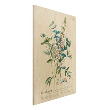 Holzbild - Vintage Botanik Illustration Hülsenfrüchte - Hochformat 3:2