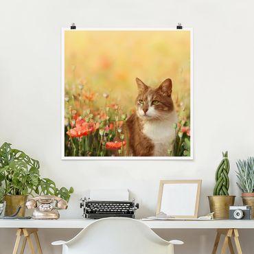 Poster - Katze im Mohnfeld - Quadrat 1:1