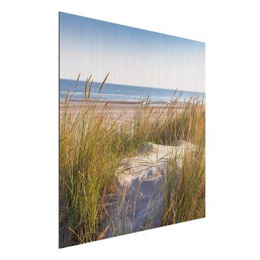 Aluminium Print gebürstet - Stranddüne am Meer - Quadrat 1:1