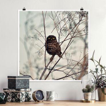 Poster - Eule im Winter - Quadrat 1:1