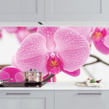 Küchenrückwand - Nahaufnahme Orchidee