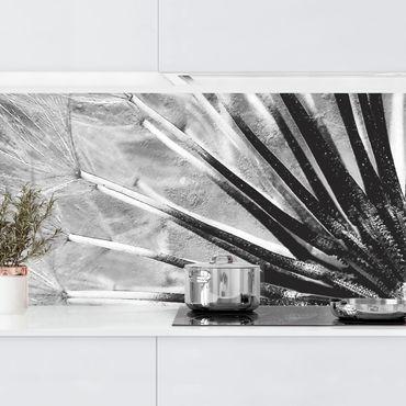 Küchenrückwand - Pusteblume Schwarz & Weiß