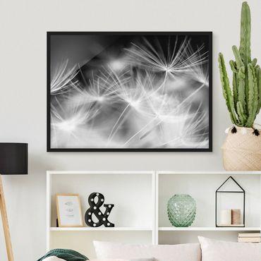 Bild mit Rahmen - Bewegte Pusteblumen Nahaufnahme auf schwarzem Hintergrund - Querformat 3:4