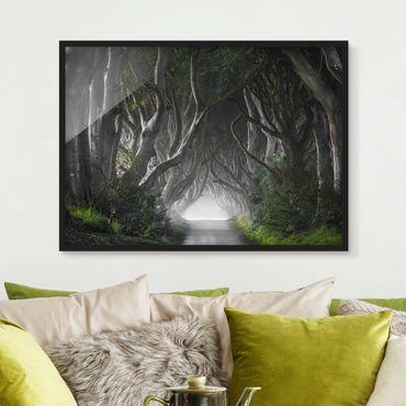 Bild mit Rahmen - Wald in Nordirland - Querformat 3:4