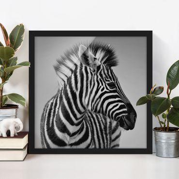 Bild mit Rahmen - Zebra Baby Portrait II - Quadrat 1:1