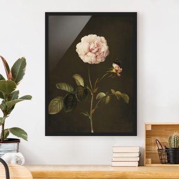 Bild mit Rahmen - Barbara Regina Dietzsch - Essig-Rose mit Hummel - Hochformat 4:3