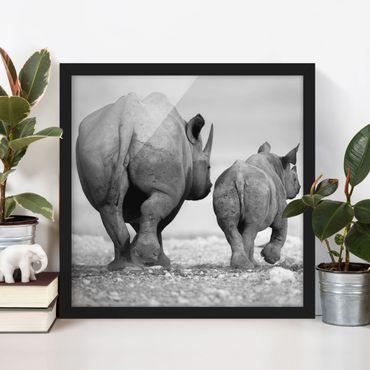 Bild mit Rahmen - Wandering Rhinos II - Quadrat 1:1