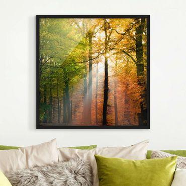 Bild mit Rahmen - Morning Light - Quadrat 1:1