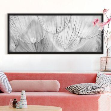 Bild mit Rahmen - Pusteblumen Makroaufnahme in schwarz weiß - Panorama Querformat