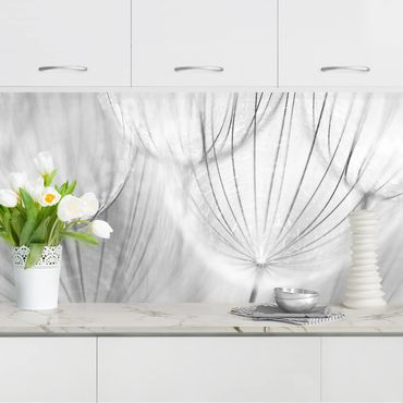 Küchenrückwand - Pusteblumen Makroaufnahme in schwarz weiß