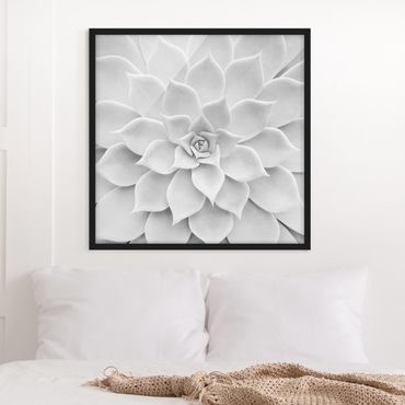 Bild mit Rahmen - Kaktus Sukkulente - Quadrat 1:1