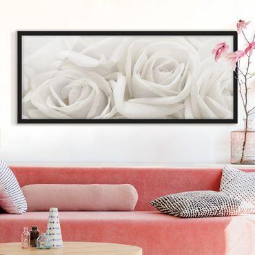 Bild mit Rahmen - Weiße Rosen - Panorama Querformat