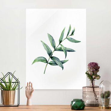 Glasbild - Aquarell Eucalyptus I - Hochformat
