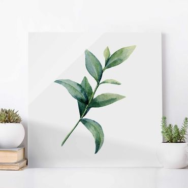 Glasbild - Aquarell Eucalyptus II - Quadrat