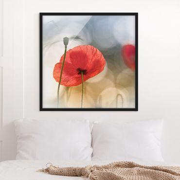 Bild mit Rahmen - Mohnblumen am Morgen - Quadrat 1:1