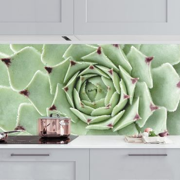 Küchenrückwand - Steinrose Jovibarba Hirta