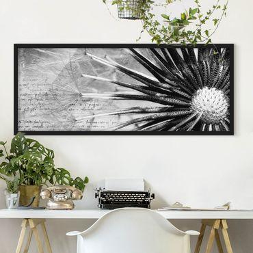 Bild mit Rahmen - Pusteblume Schwarz & Weiß - Panorama Querformat
